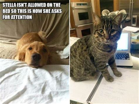When Your Pets Want Attention, They'll Let You Know - 18 Pics