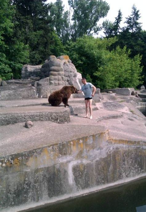 Man climbs into bear enclosure, puts arm in its mouth and