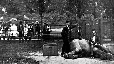 Vulgar Display of Power - A History of the Zoo - YouTube