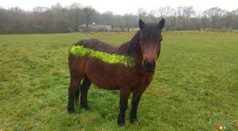 English Town Paints Ponies to Protect Against Cars | Car