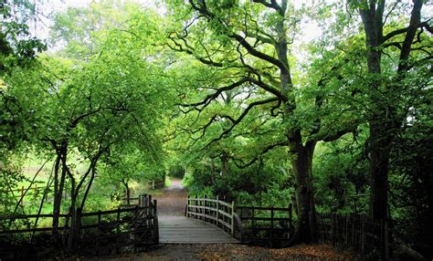 An enchanted (and real) place: Winnie-the-Pooh's woods