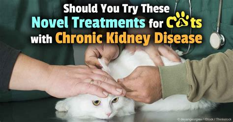 Can Stem-Cell Therapy Treat Chronic Kidney Disease in Cats?